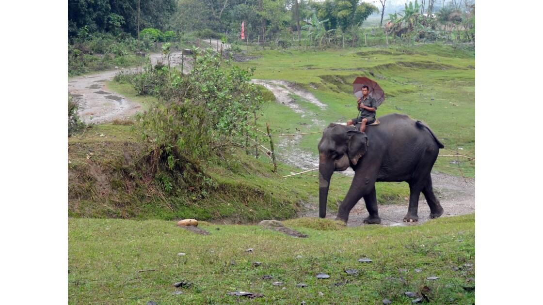 Népal Parc de Chitwan Sous la pluie