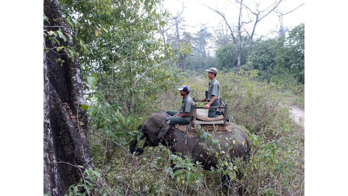 Népal A travers les broussailles du Parc de Chitwan 1