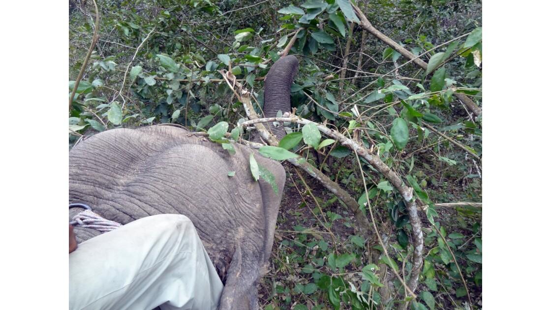 Népal A travers les broussailles du Parc de Chitwan 2