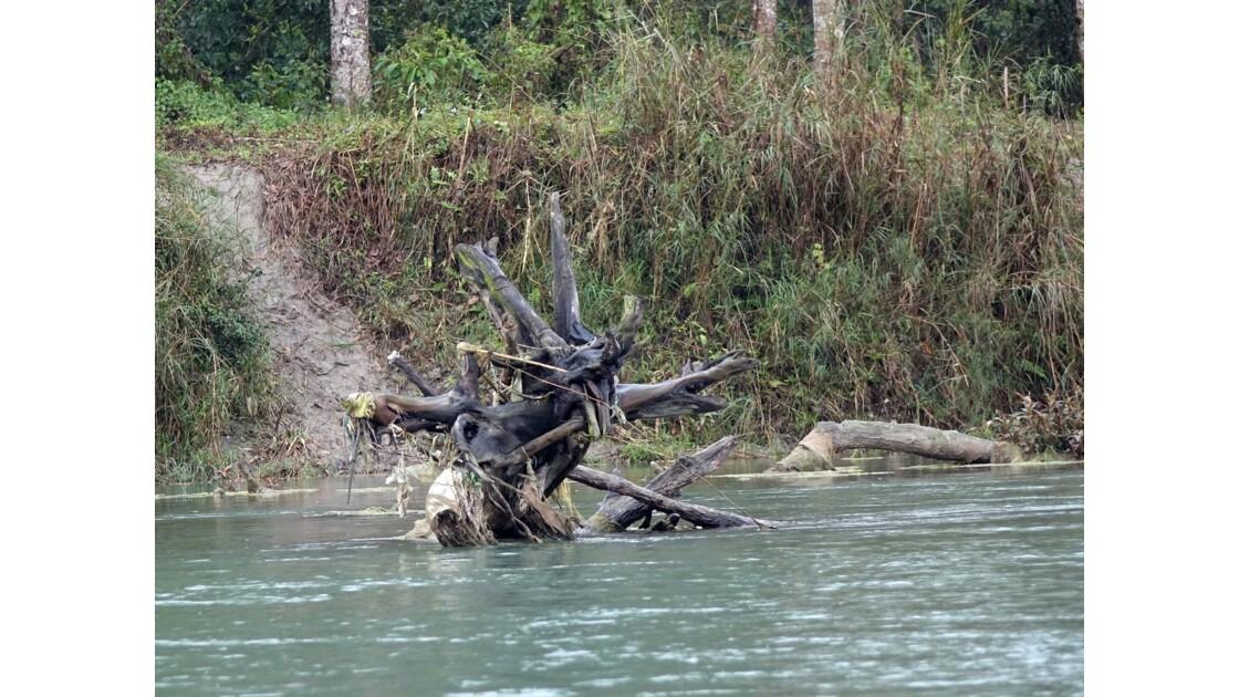 Népal Parc de Chitwan Rivière Rapti 2