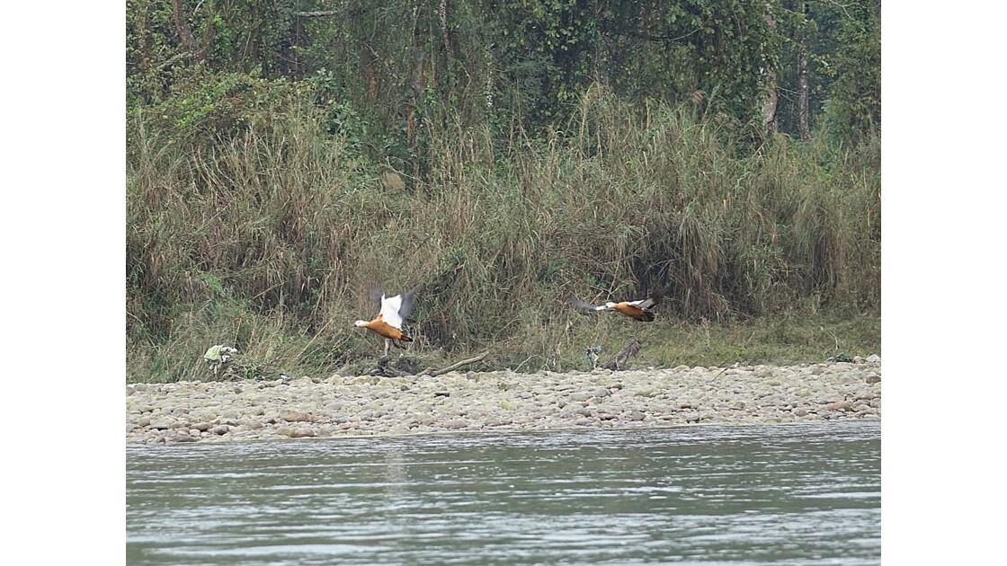 Népal Parc de Chitwan Rivière Rapti 4