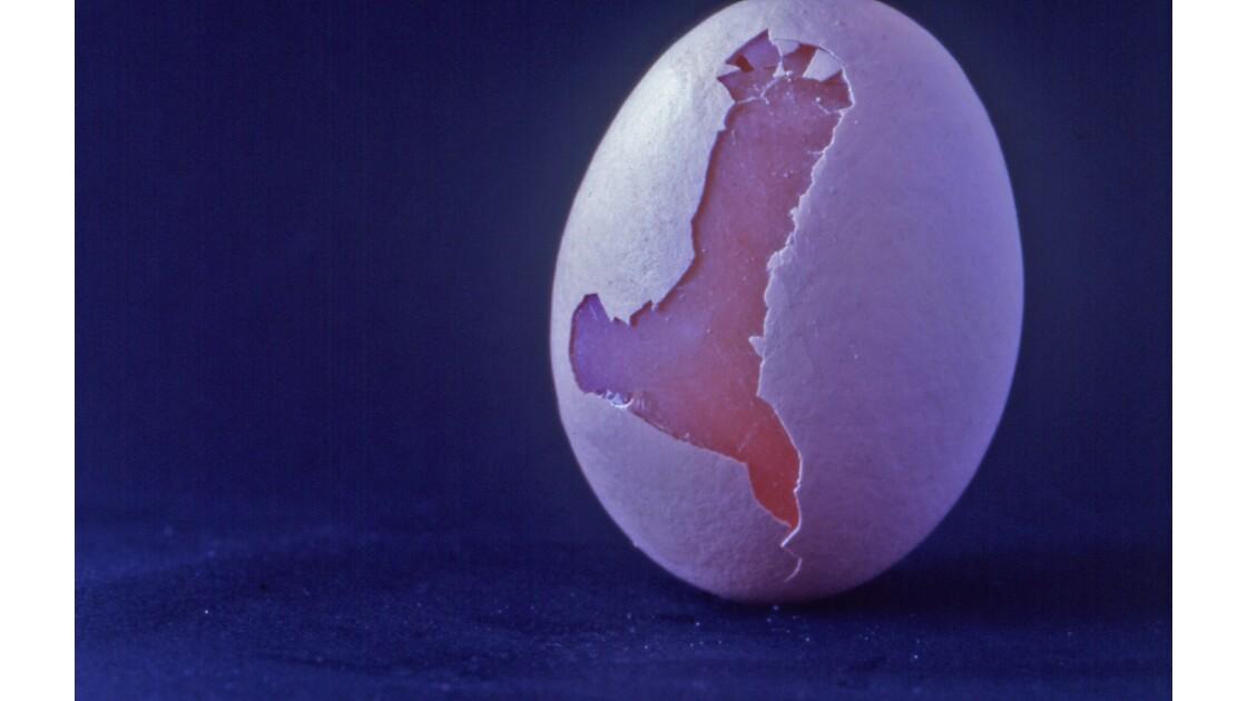 œuf blanc haute corse