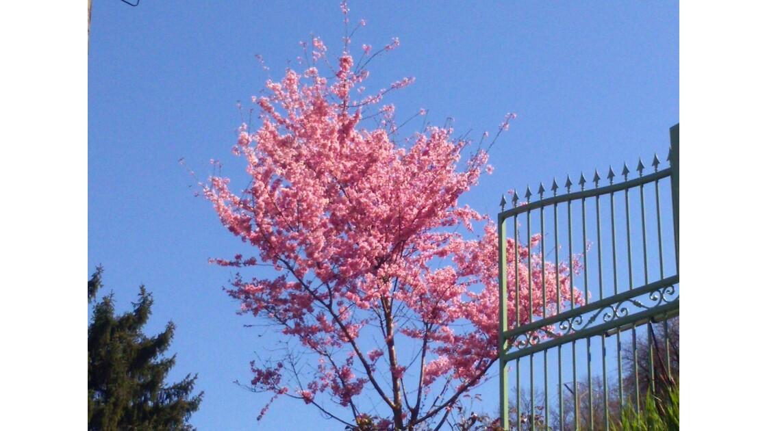 Arbre en fleurs dans le ciel bleu