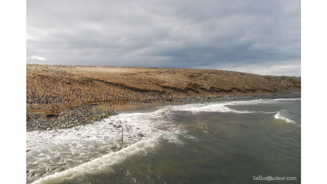 Colonie de Pingouins, Isla Magallanes