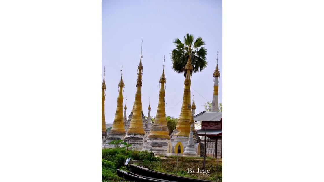 palmier et stupas