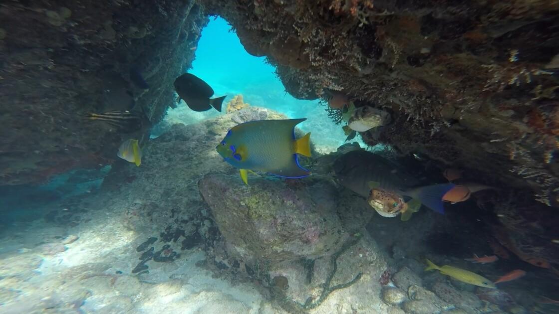 aquarium des anses d'arlet