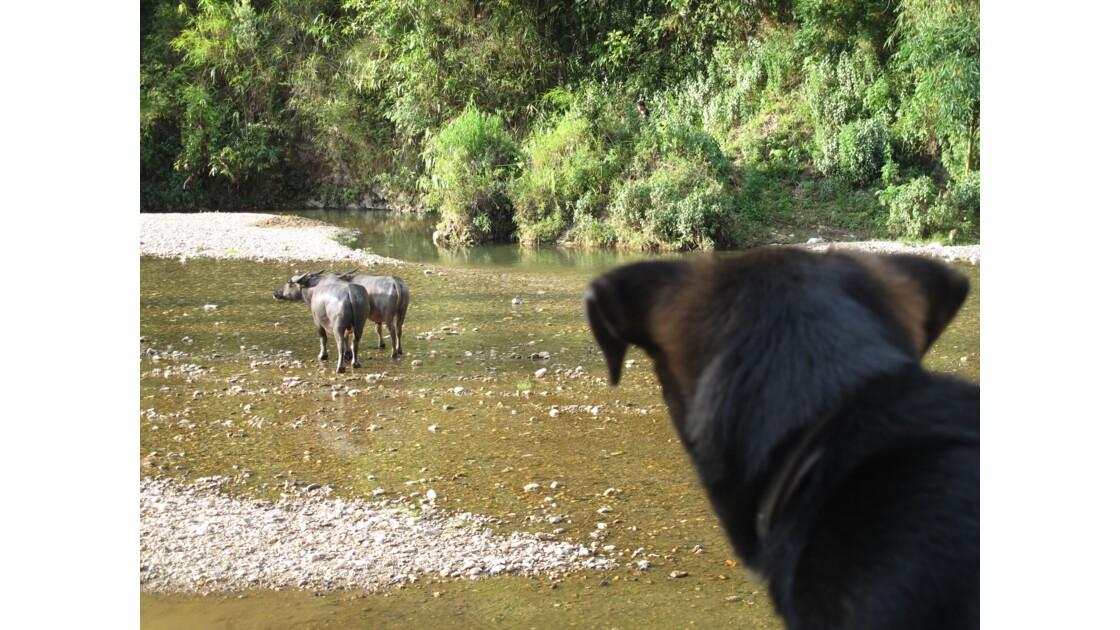 Le chien et la rivière