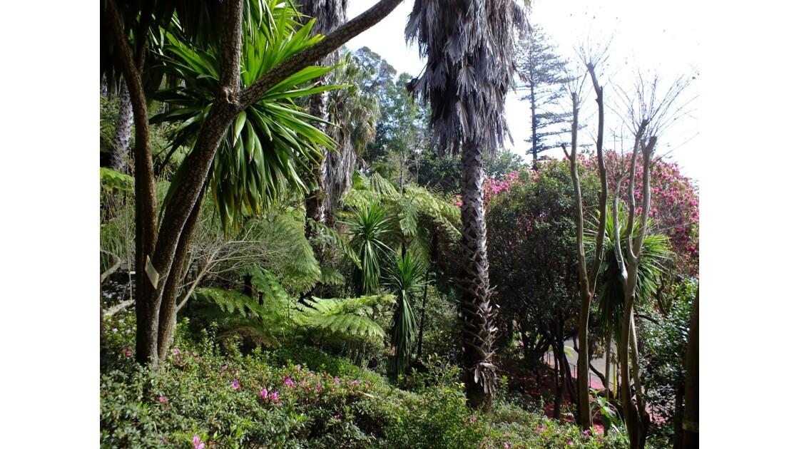 palmiers et fourgères arborescentes