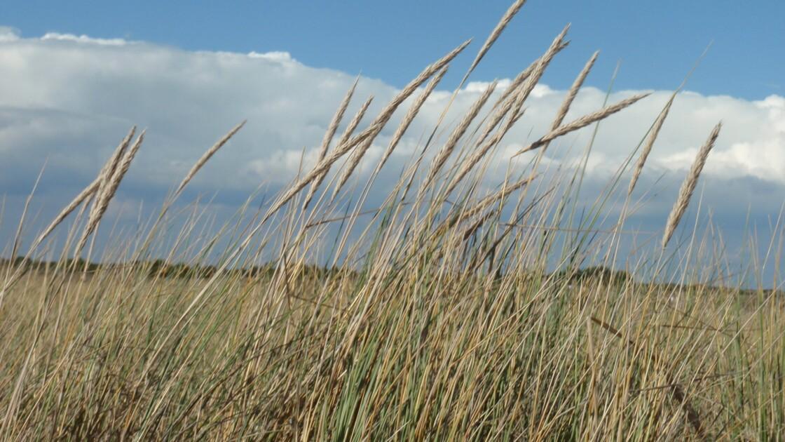 Depuis la plage du Plouhinec (morbihan)
