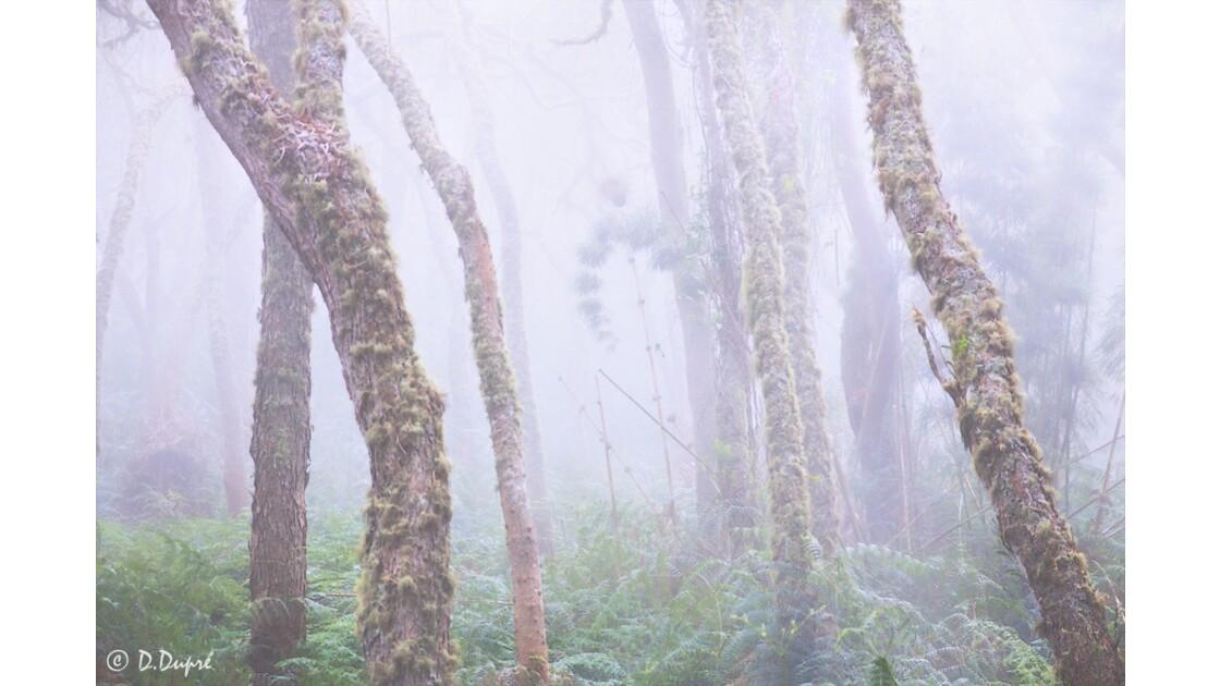 Brouillard au Maïdo
