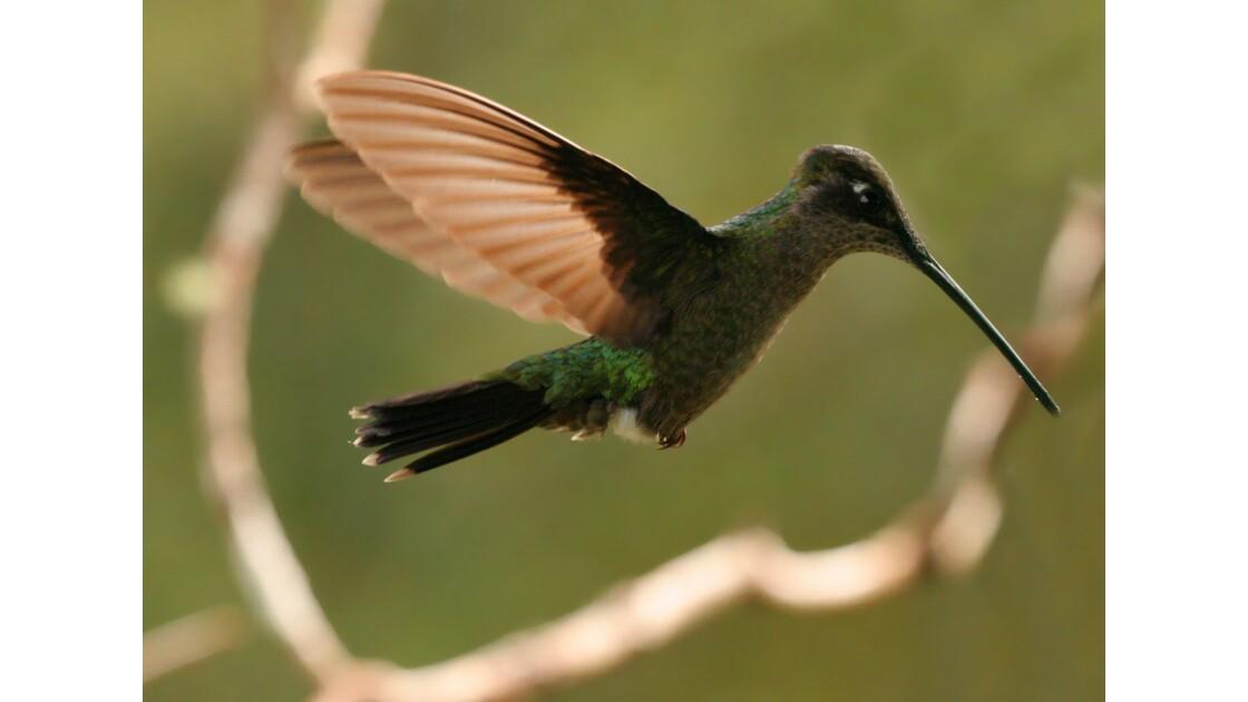 La faune du Costa Rica