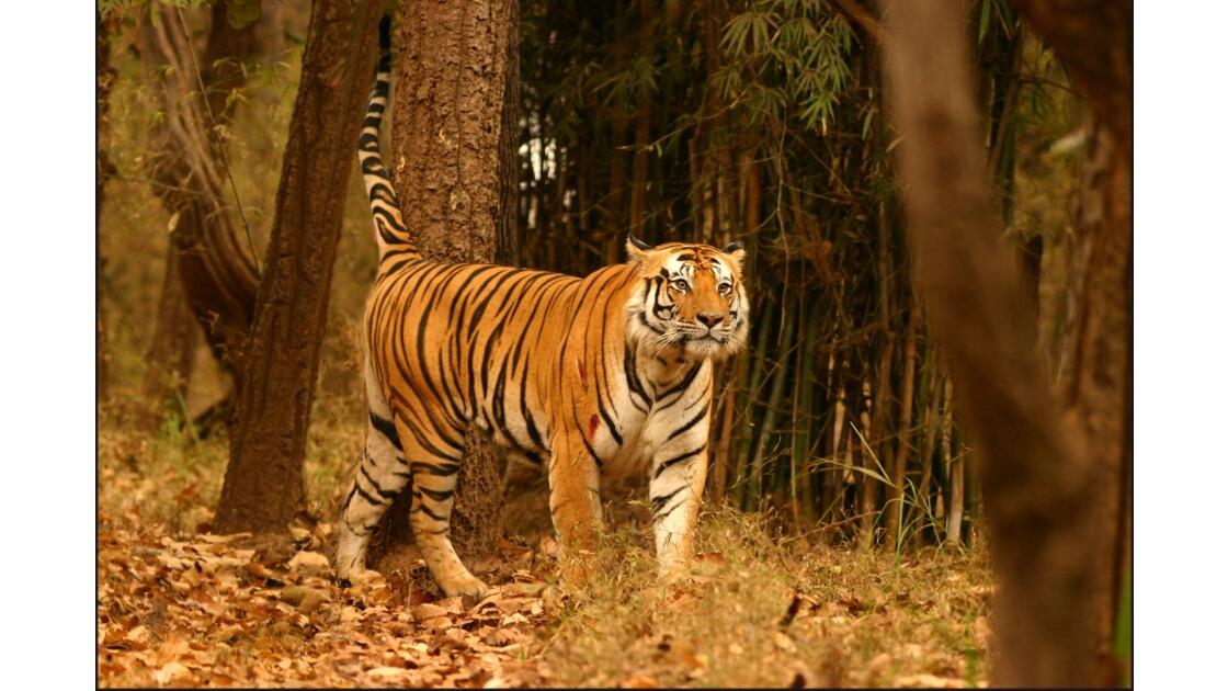 Le parc de Bandhavgarh