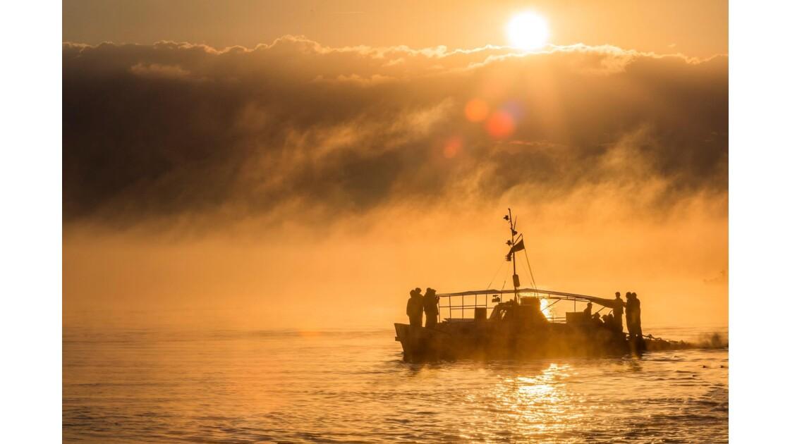 Brume matinale en Delta du Danube