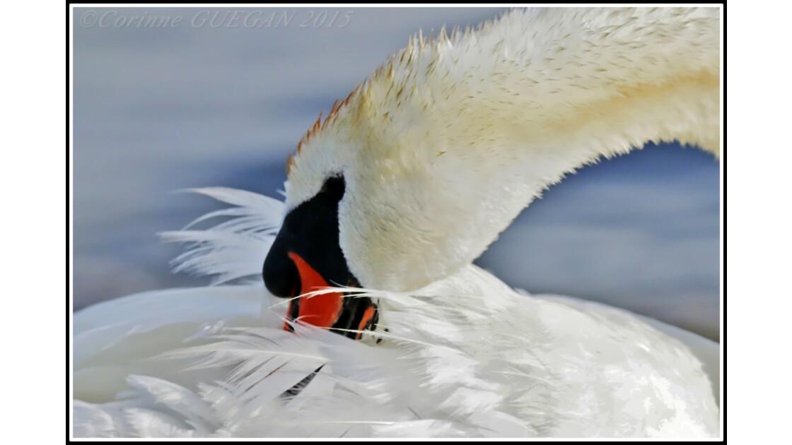 oiseaux de savoie