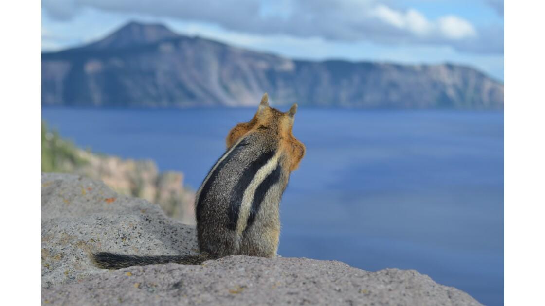 Écureuil face au Crater Lake