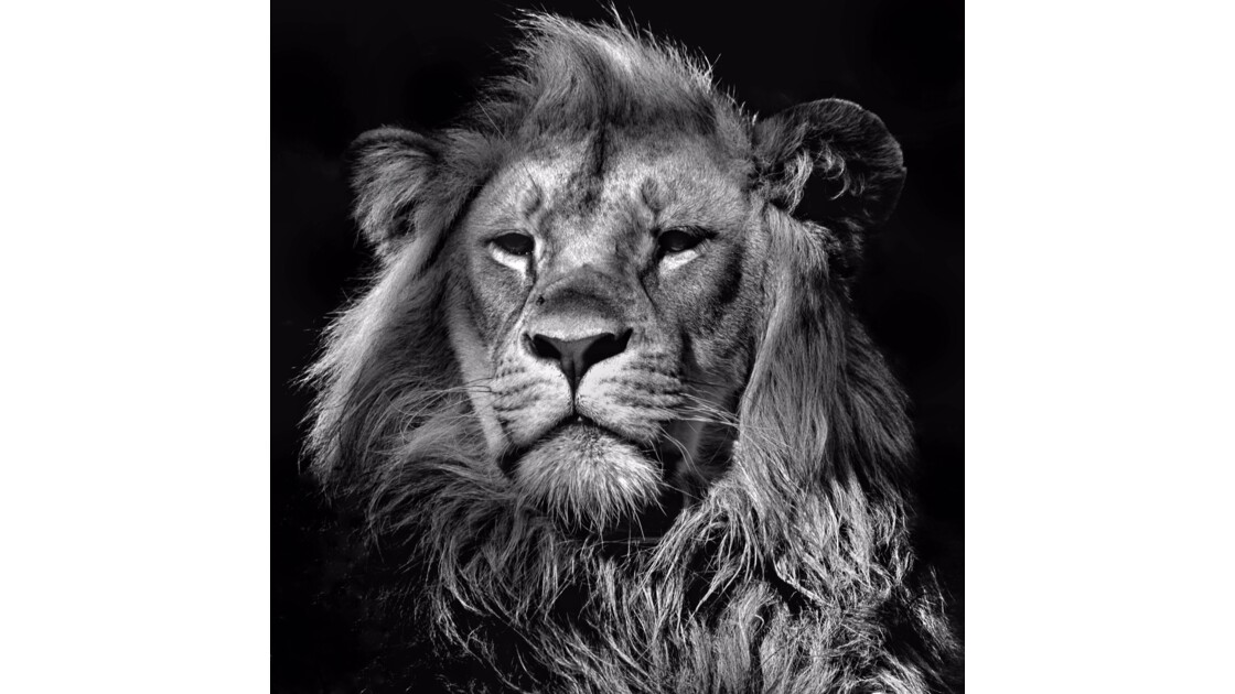 Majestuosité