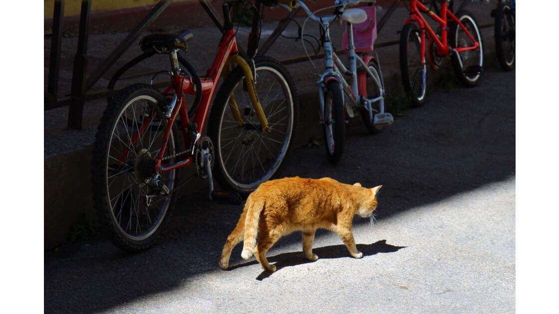 Chat roux de vélo