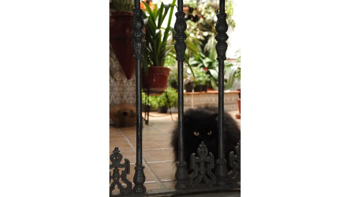 Gardien de patio