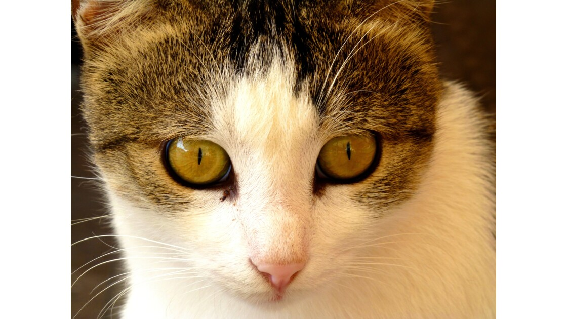 Les yeux perçants de Procida
