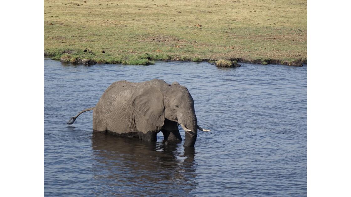 Botswana la traversée du fleuve Chobe 2