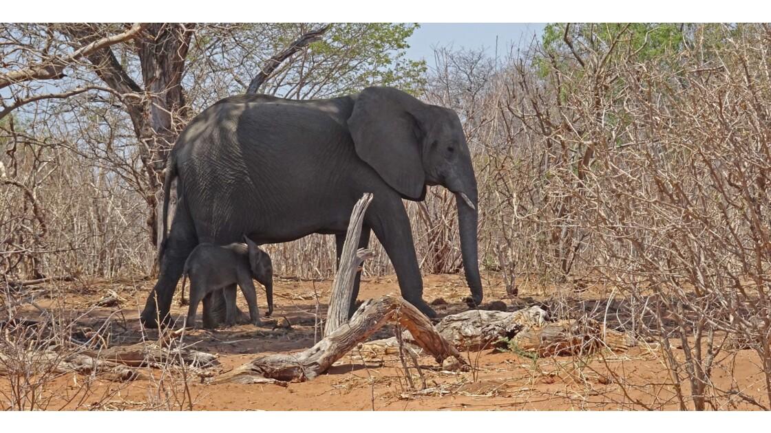 Botswana sur la route de Chobe