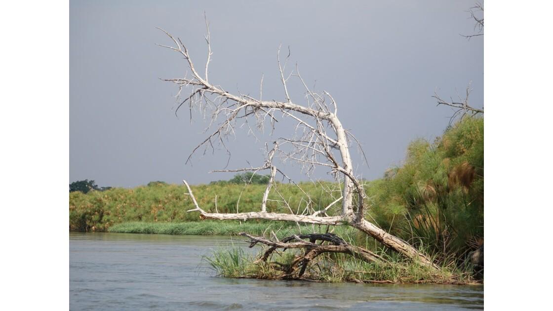 Botswana Delta de l'Okavando 1