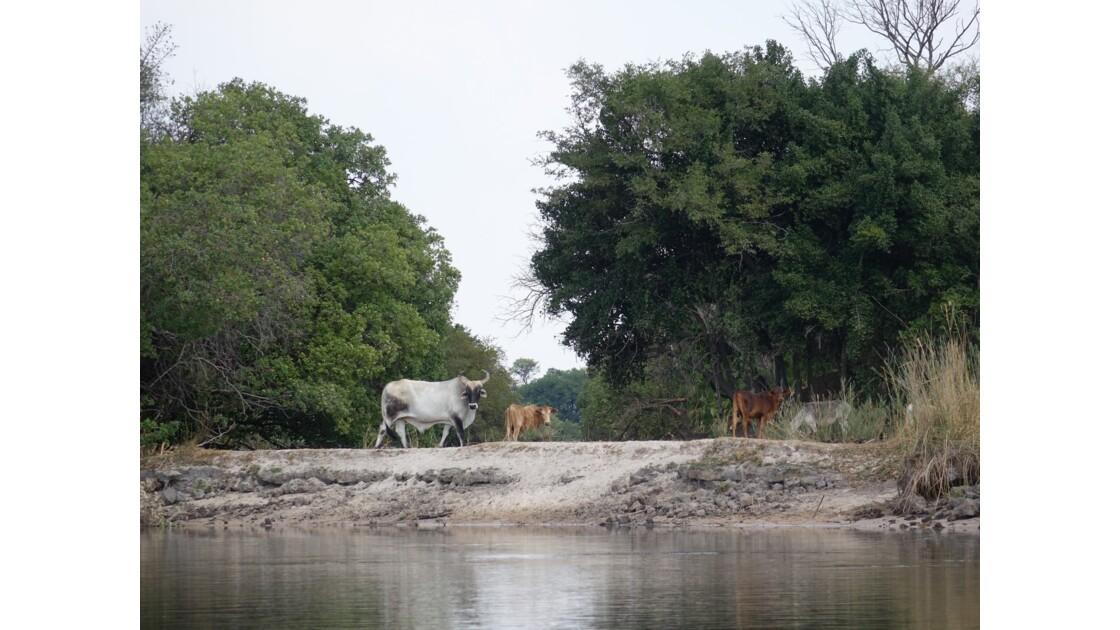 Botswana Delta de l'Okavando 2