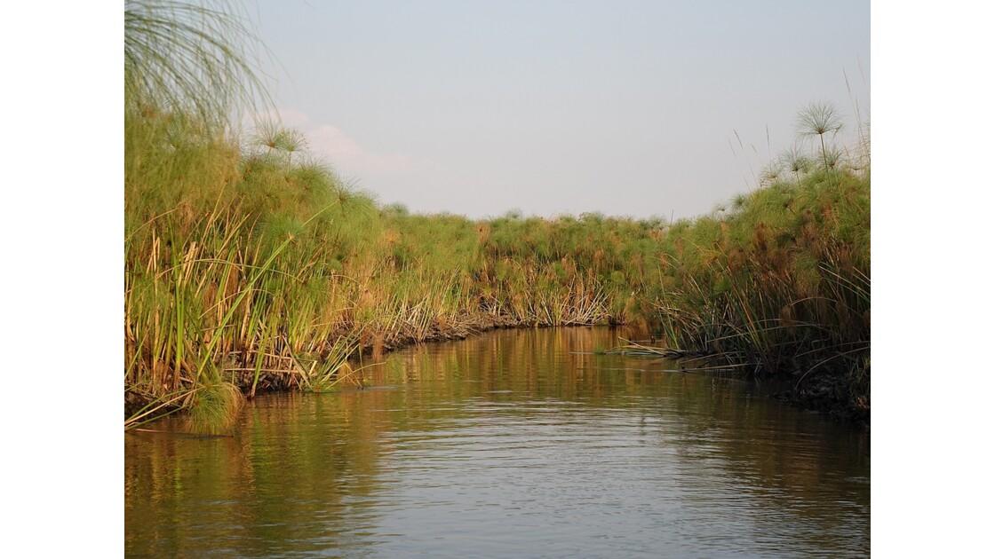 Botswana les papyrus du Delta de l'Okavando 1