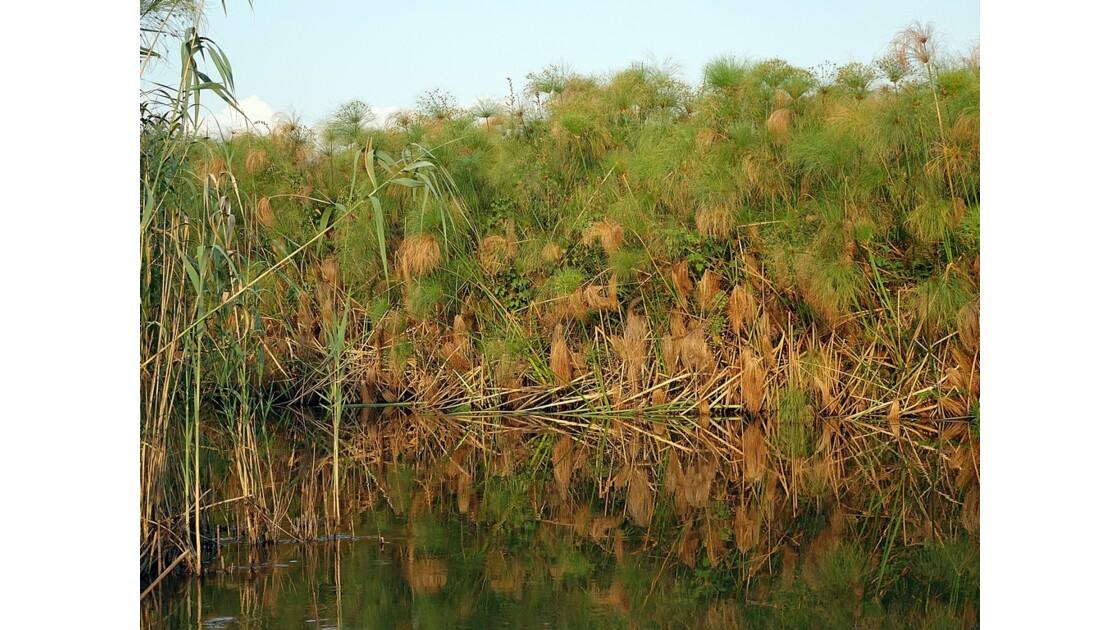 Botswana les papyrus du Delta de l'Okavando 2