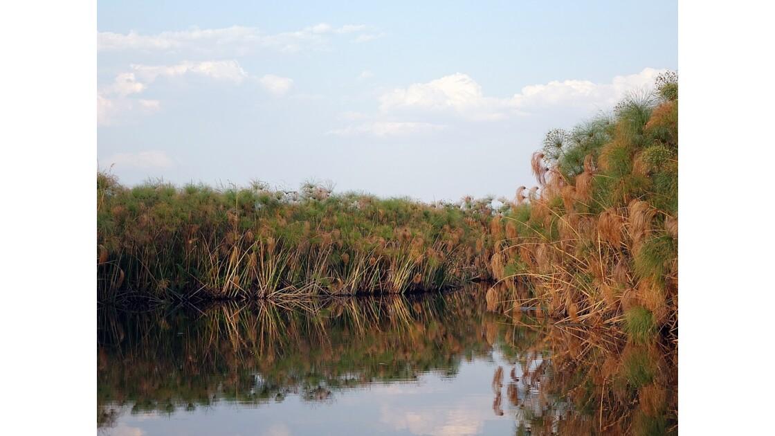 Botswana les papyrus du Delta de l'Okavando 3