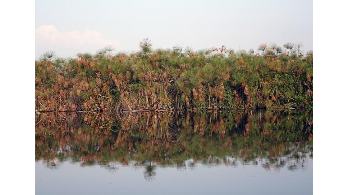 Botswana les papyrus du Delta de l'Okavando 4