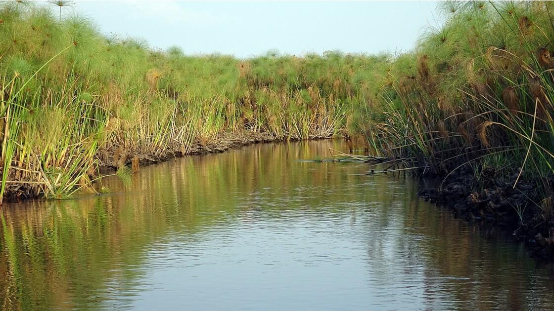Botswana les papyrus du Delta de l'Okavando 5