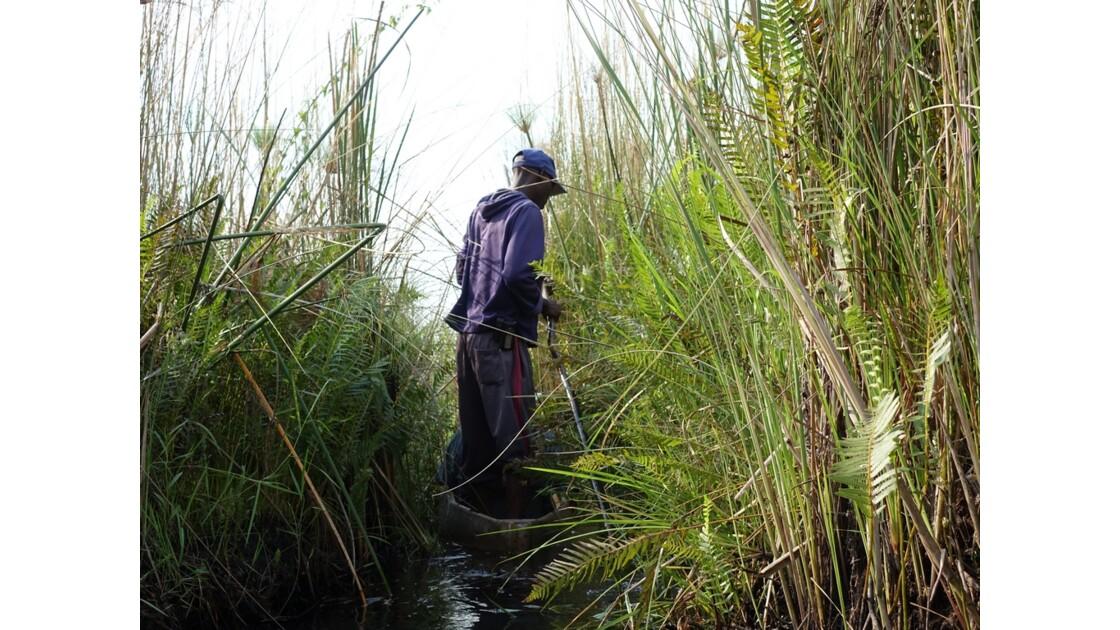 Botswana Okavango mokoro sur l'île Pépère 2