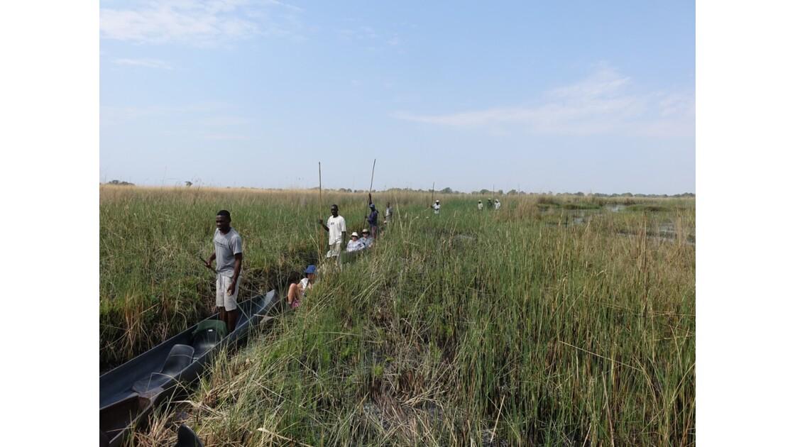 Botswana Okavango mokoro sur l'île Pépère 6