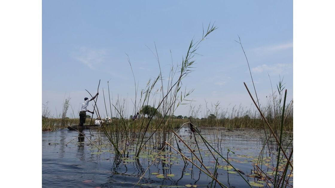 Botswana Okavango mokoros sur l'île Pépère 8