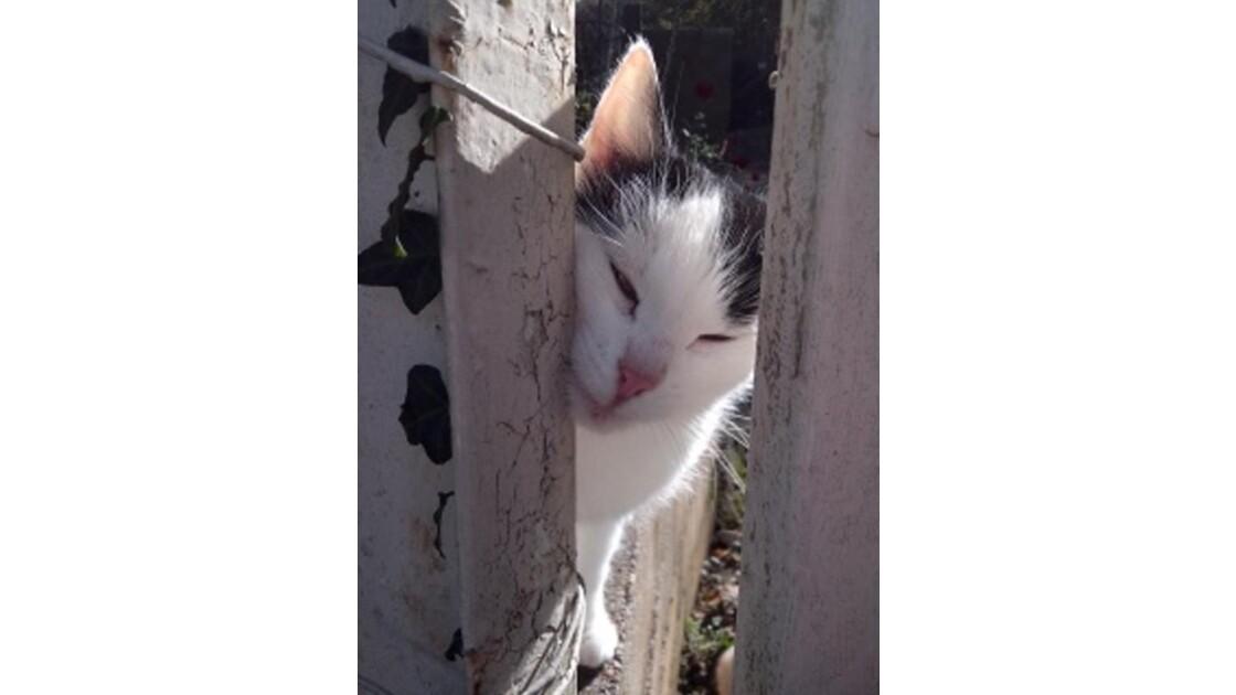 chats en france