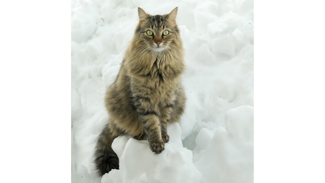 Pilou sur son trône hivernal