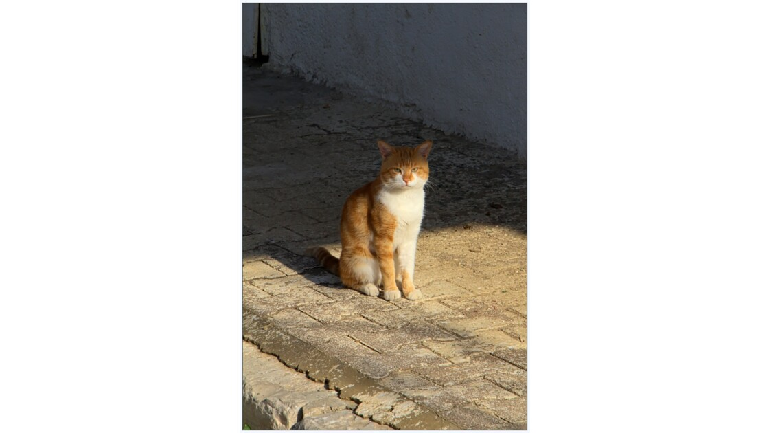 Chat goulettois