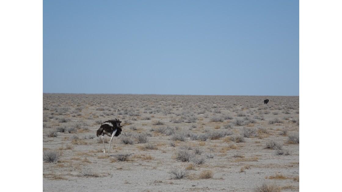 Namibie Etosha entre Namutoni et Okaukuejo 8