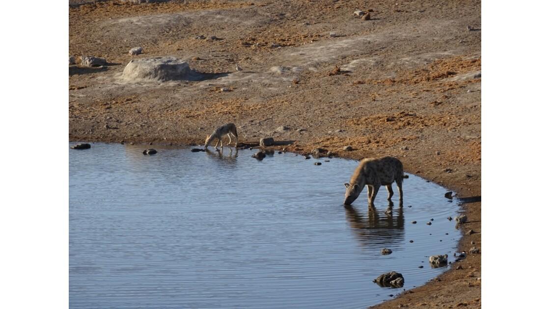 Namibie Etosha entre Namutoni et Okaukuejo au point d'eau 2