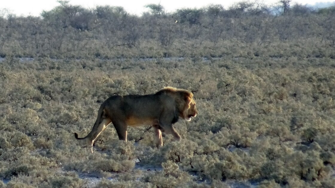 Namibie Etosha Ils vont tous au point d'eau 2