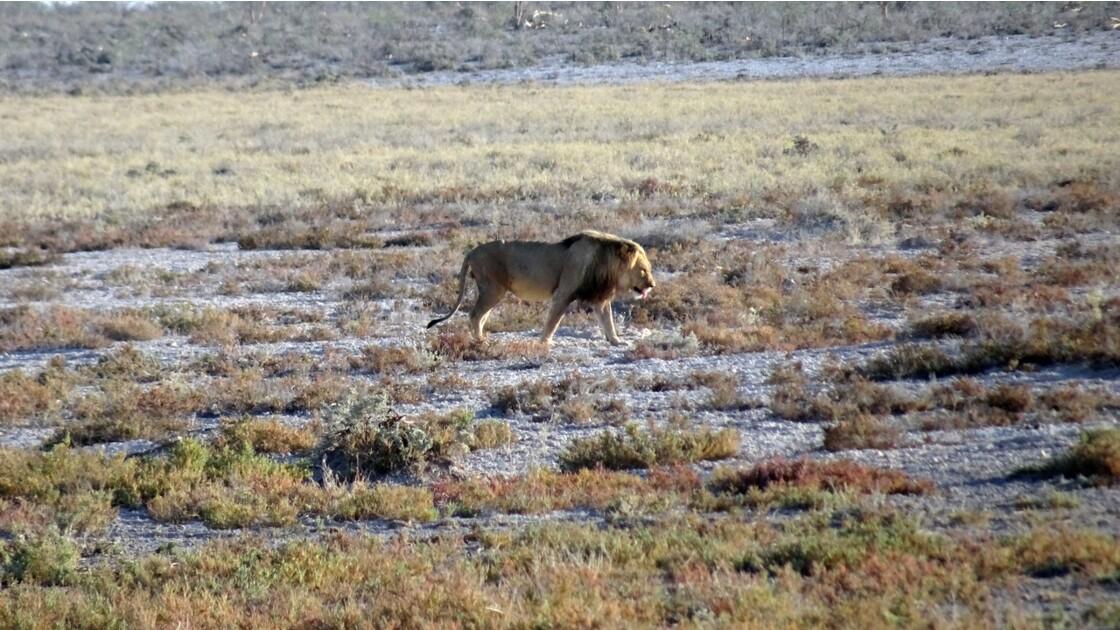 Namibie Etosha Ils vont tous au point d'eau 3