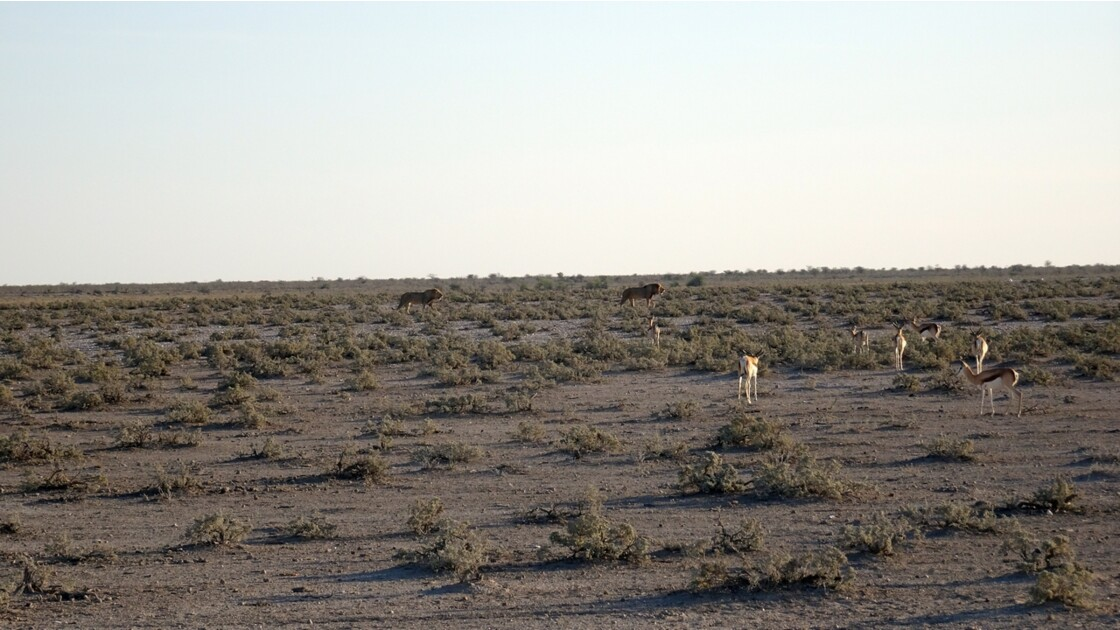 Namibie Etosha Ils vont tous au point d'eau 6
