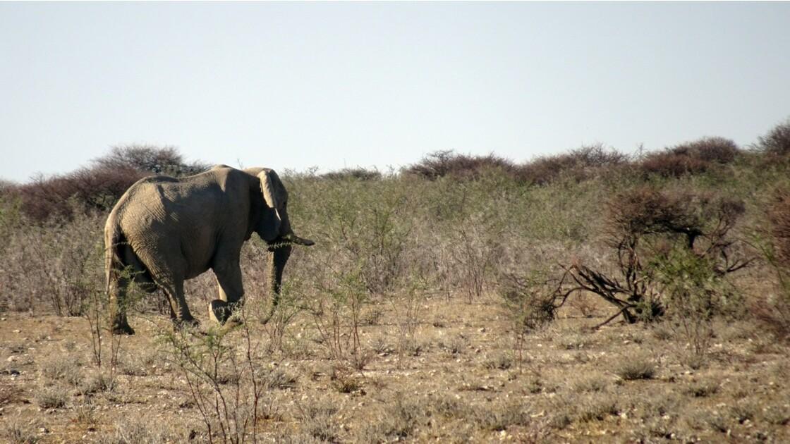 Namibie Etosha Ils vont tous au point d'eau 7