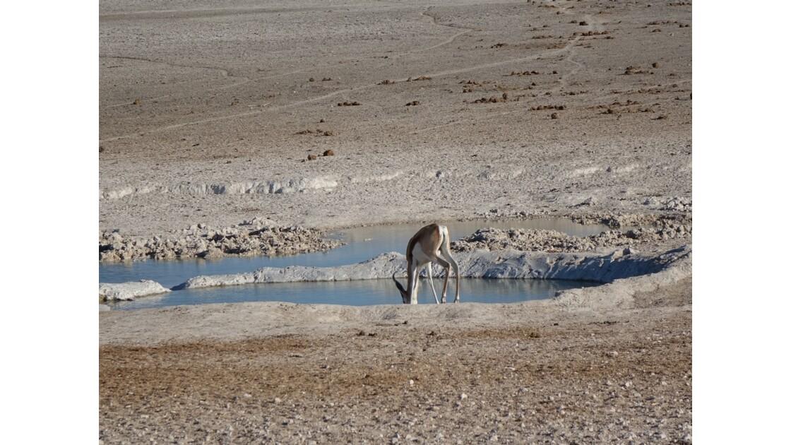 Namibie Etosha En attendant les lions 3