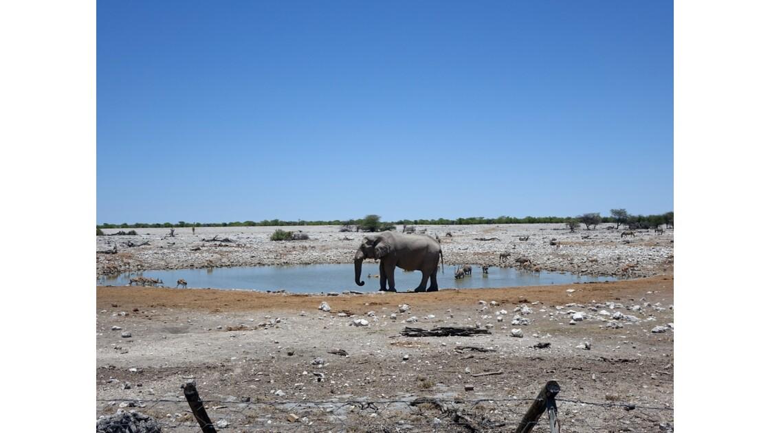 Namibie Etosha Point d'eau d'Okaukuejo 1