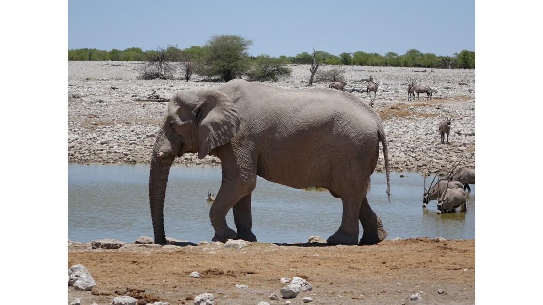 Namibie Etosha Point d'eau d'Okaukuejo 2