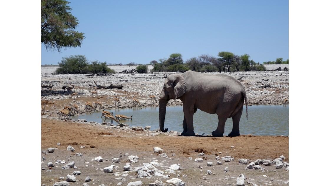Namibie Etosha Point d'eau d'Okaukuejo 3
