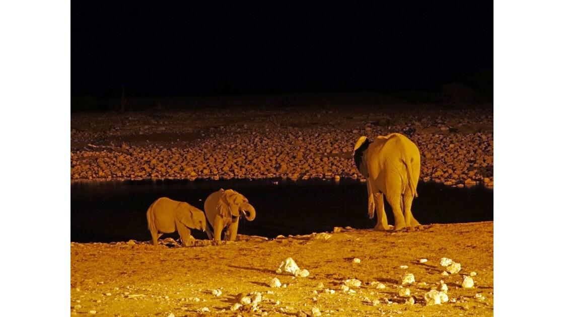 Namibie Etosha Point d'eau d'Okaukuejo la nuit 1