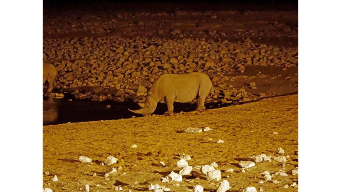 Namibie Etosha Point d'eau d'Okaukuejo la nuit 5